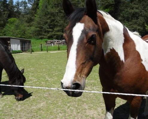 pferdehaltung
