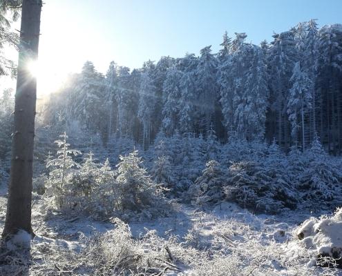 im winterwald leben