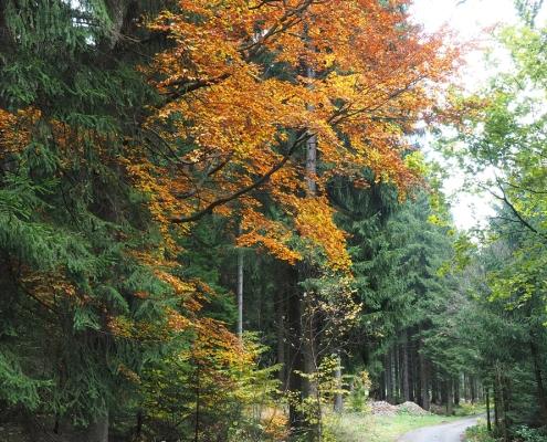Herbst Wandern im Waldviertel